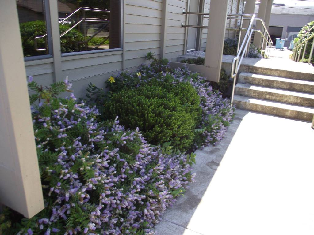 Bushes near a set of stairs with purple flowers
