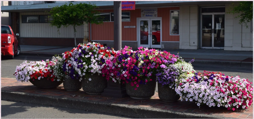 Potted Colorful Flowers in Front of a Bakery